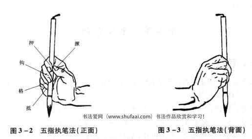 图3—2五指执笔法(正面)    图3—3五指执笔法(背面)
